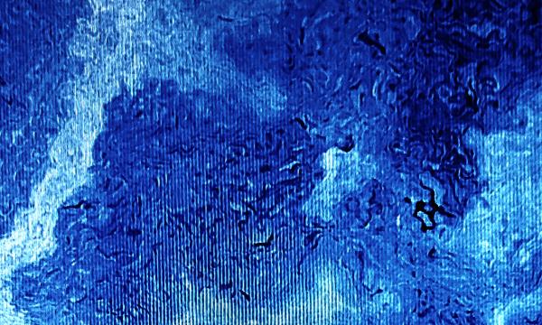 WavesFossil_05_Brain fog_WEB